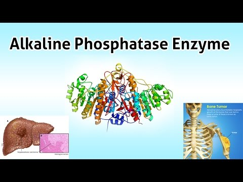 Alkaline Phosphatase Enzyme  ( Clear Over View )