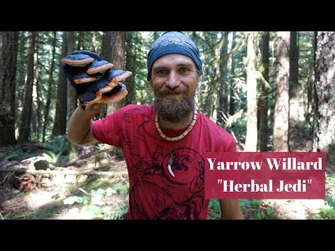 The Healing Power of Polypores   Medicinal Mushroom Mysteries   Harmonic Arts