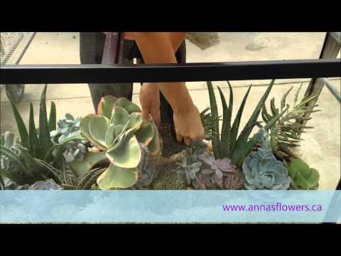 DIY Succulent Aquarium