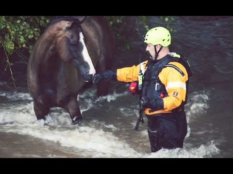 College Station Fire Department rescues horse stranded in Harvey flood waters 08/27/2017