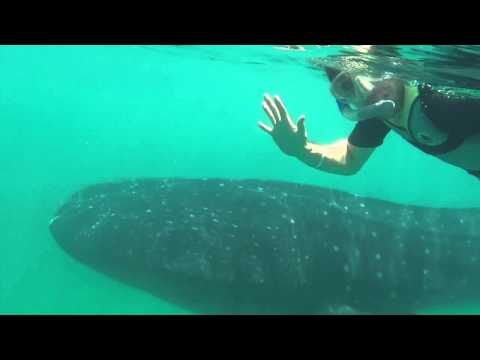 Swim and Snorkel with Whale Sharks in Mexico's Yucatan Peninsula