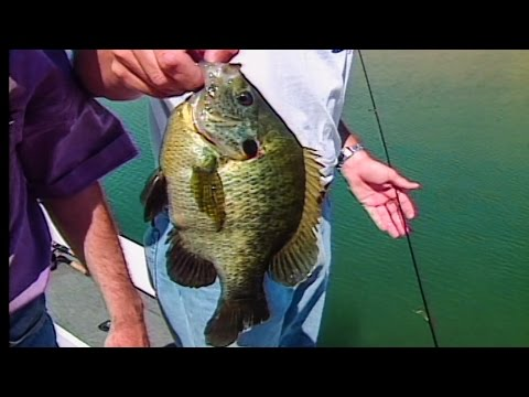 Pond Fishing for Monster Sunfish with Mark Kyle