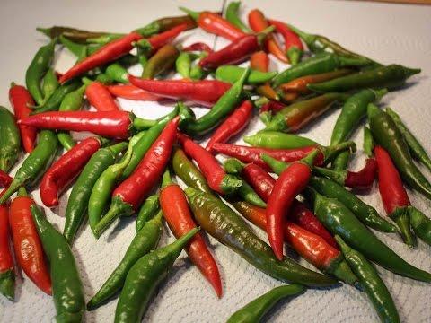 Chili auf dem Balkon anbauen - Von der Aussaat bis zur Ernte