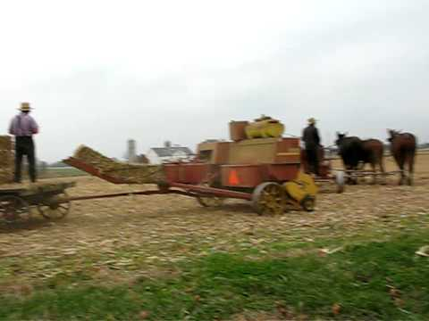 Amish Baling Corn Stalks with a Team of Mules