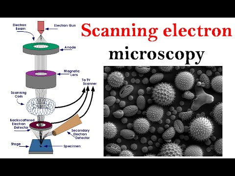 Electron microscopy lecture | Scanning electron microscope