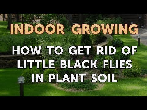 How to Get Rid of Little Black Flies in Plant Soil