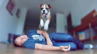 Pretending To Faint In Front Of My Dog. Amazing Reaction by Flip 