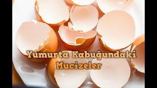 Yumurta Kabuğundaki Mucizeler - Yumurta kabuğu tozu-eggshell miracle - cimenhulya