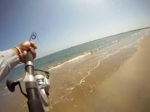 Surf fishing for Leopard shark!
