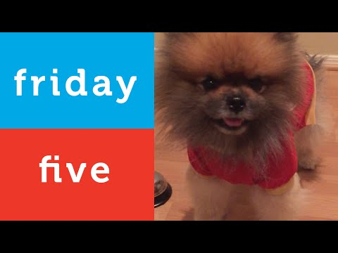 Dog Conquers Fear of Carpet and More (Petco Friday 5)