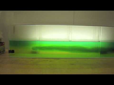 Hot, Cold, and Warm Water Density Model