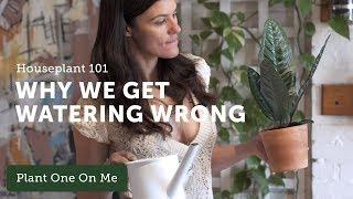 Ep 119. Houseplant 101: How Often to Water Your Houseplants