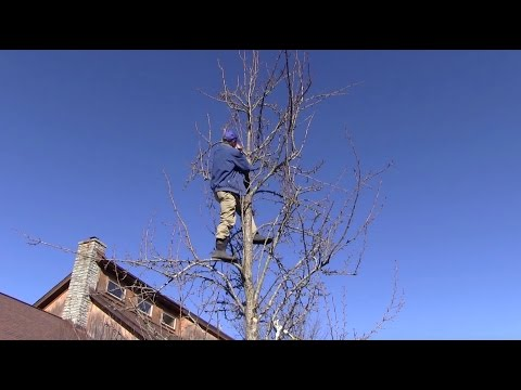 How-To Prune a Fruit Tree
