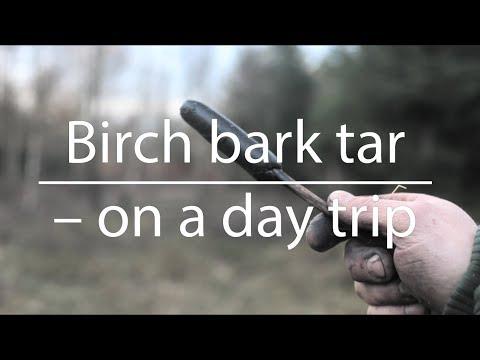 Birch bark tar – on a day trip (Bushcraft)