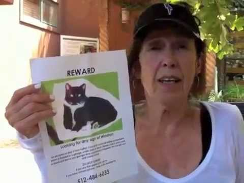 Lost Cat Found after months missing
