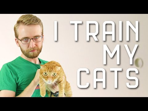 I Train My Cats With PSYCHOLOGY