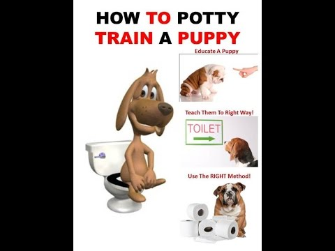 How To Potty Train Your Dog | 7 Days Training | How to House Train Your Dog