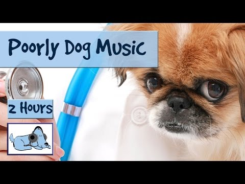 2 Hours of Music for Ill or Stressed Dogs. Musical Therapy for Pets. 🐶 #POORLY04