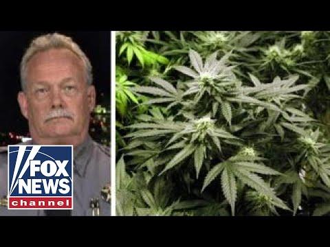 Colorado sheriff speaks out about black market marijuana