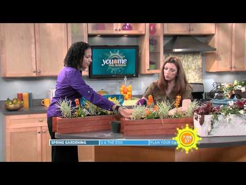 How To Plant an Urban Window Box or Balcony Garden - WCIU TV