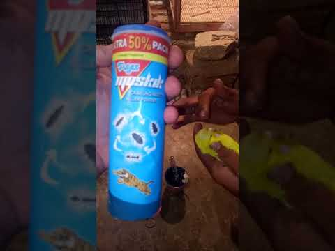 Mites waly birds ki treatment