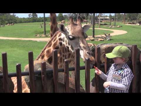 Australia Zoo, Zoo Keeper for a Day