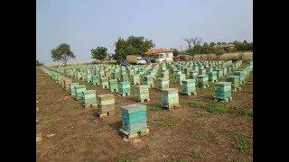 Пчеловод Александр Андреевич - пасека 450 семей