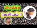 Download  மிளகின் ரகசியம் secret of pepper in tamil MP3,3GP,MP4