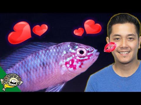 Rare Fish Unboxing
