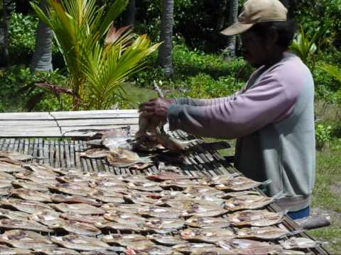 Banggai archipelago: preparing fish to be sun-dried