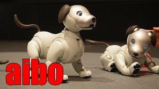 狂おしいほどかわいい「aibo(アイボ)」がきゅんきゅん鳴く動画