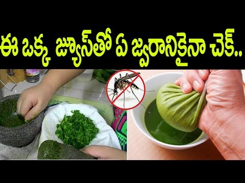 Dengue Fever Symptoms and Treatment || Dengue Fever Remedies in Telugu || Telugu Health Tips