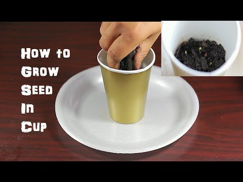 How to Grow A Seed In Soil Fruit Flowers Plants ep. 1
