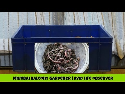 How To Start A New Composting Worm Bin ( Step By Step) DIY-Viewer Request