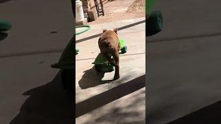 Skating Pup