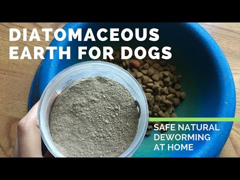 Diatomaceous Earth for Dogs - Safe and Natural Deworming at Home