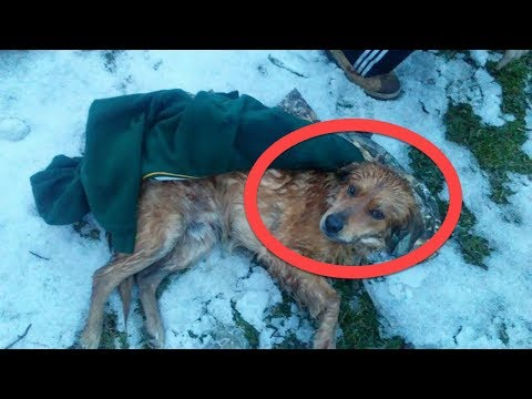 After This Stray Dog Was Struck By A Car, He Was Left In The Snow To Slowly Die