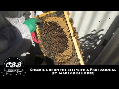 Checking in on the Bees with a Professional (ft. Mademoiselle Bee)