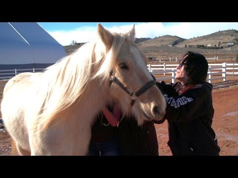 These Veterinarians Will Remove This Therapy Horse's Tumor Without Leaving The Farm
