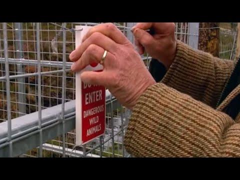 Dangerous wild animals & protecting the public - Moose in the Glen - BBC
