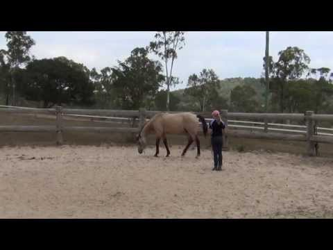 How to teach a horse to lay down naturally (without ropes) ~ Tutorial!