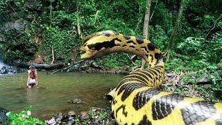 Amazon Ormanında Saklanan En Büyük Yılan..