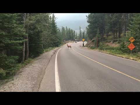 Rare white-tailed unicorn in Banff