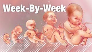 Pregnancy Week-By-Week 🌟 Weeks 3-42 Fetal Development 👶🏼