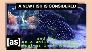 FishCenter Recap 8/7/17 | FishCenter | Adult Swim