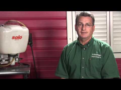 Pest Control   How to Get Rid of Roaches