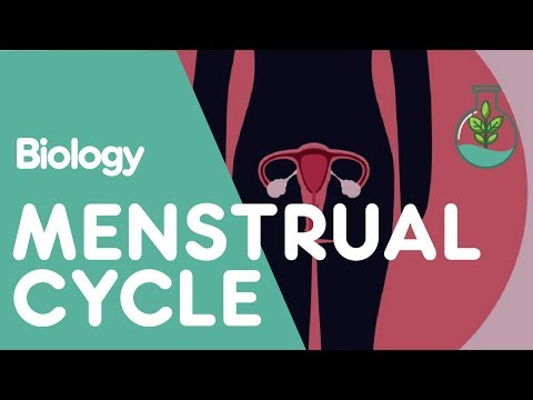 What is the Menstrual Cycle? | Biology for All | FuseSchool