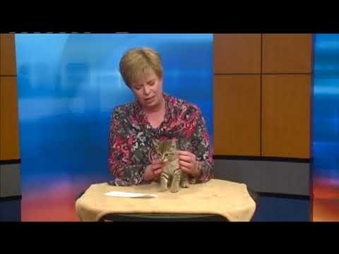 Pet of the Week - Rick