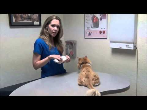 Insulin Basics for your Diabetic Cat