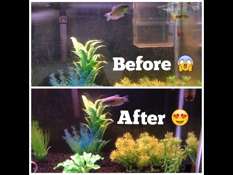 How To Remove Algae From Fish Tanks